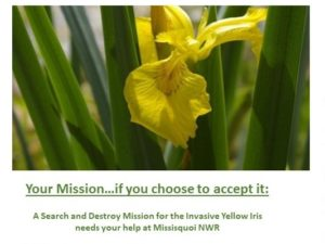 A Search and Destroy Mission for the Invasive Yellow Iris @ Missisquoi National Wildlife Refuge